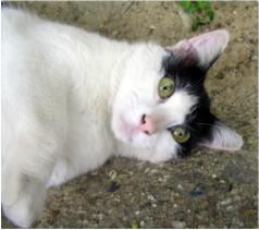 外猫事件_b0105719_023671.jpg