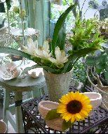 オークリーフ(夏の花)_f0049672_11324893.jpg