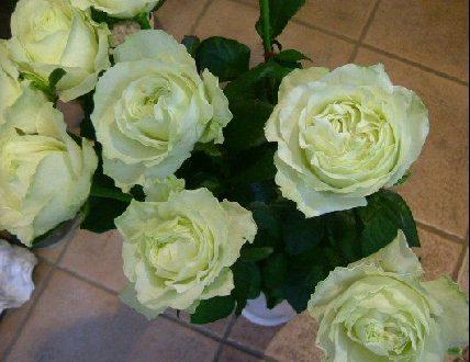 オークリーフ(夏の花)_f0049672_11333269.jpg