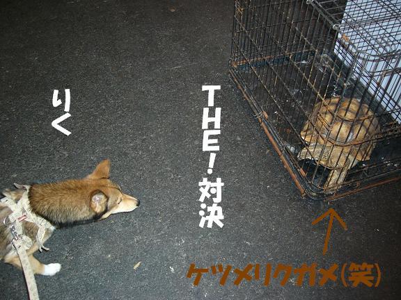 d0032004_21122239.jpg