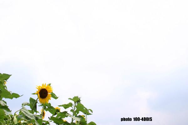 c0080036_045438.jpg