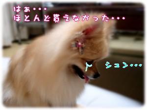 b0078073_23412631.jpg