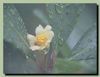梅雨前線_f0079990_10421530.jpg