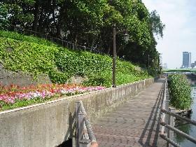 水辺のトレイル (江東区)_a0073540_7134176.jpg