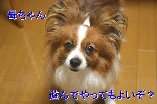 d0013149_20152291.jpg