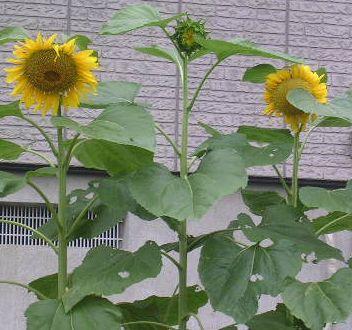 2007年7月17日(月)・・・海の日_f0060461_9422349.jpg