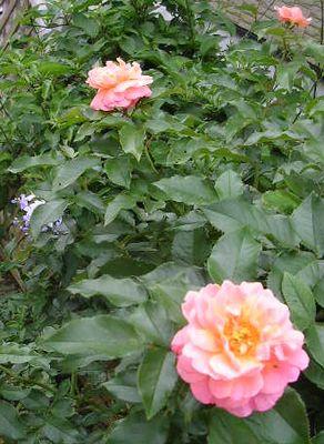 2007年7月17日(月)・・・海の日_f0060461_9443642.jpg