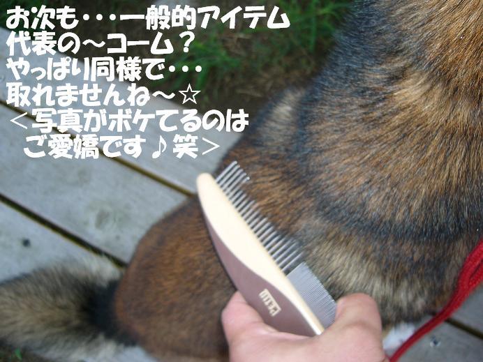 d0032004_19374355.jpg