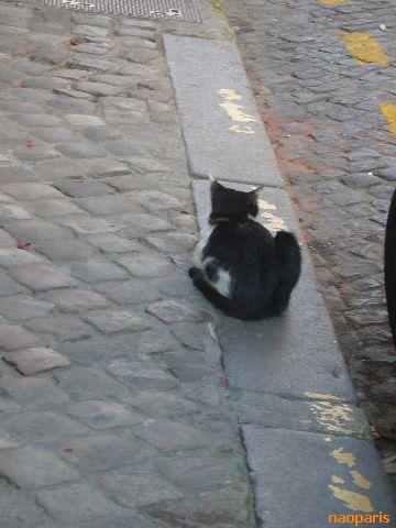 ■街角の猫(ボルドー)_a0008105_19153035.jpg