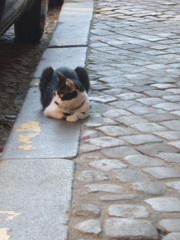 ■街角の猫(ボルドー)_a0008105_19154689.jpg