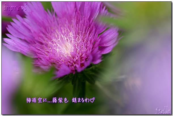 d0015026_820491.jpg