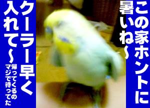 b0053867_213664.jpg