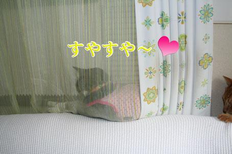 f0101903_13405831.jpg