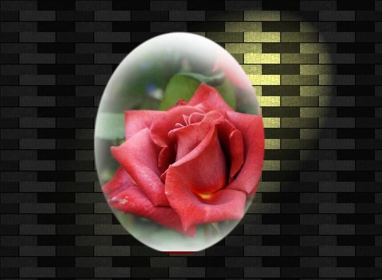 f0103534_21393863.jpg