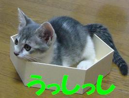 ちょうど 良い大きさの箱をもらいました_f0002743_956284.jpg