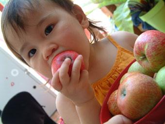 りんご収穫_b0027781_1501840.jpg