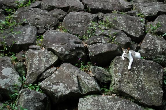 和歌山城の石垣の刻印_b0093754_0321089.jpg