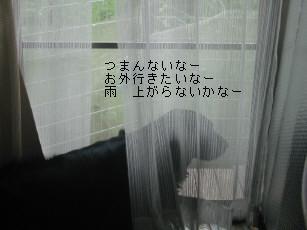 d0070289_1714477.jpg