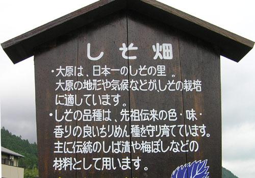 柴漬けの里ー大原_e0048413_225554.jpg