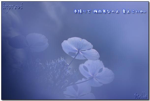 d0015026_8224390.jpg