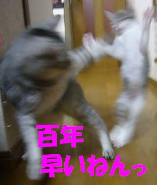 f0002743_22195170.jpg