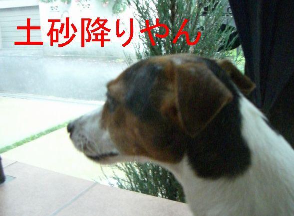 f0053952_1018744.jpg