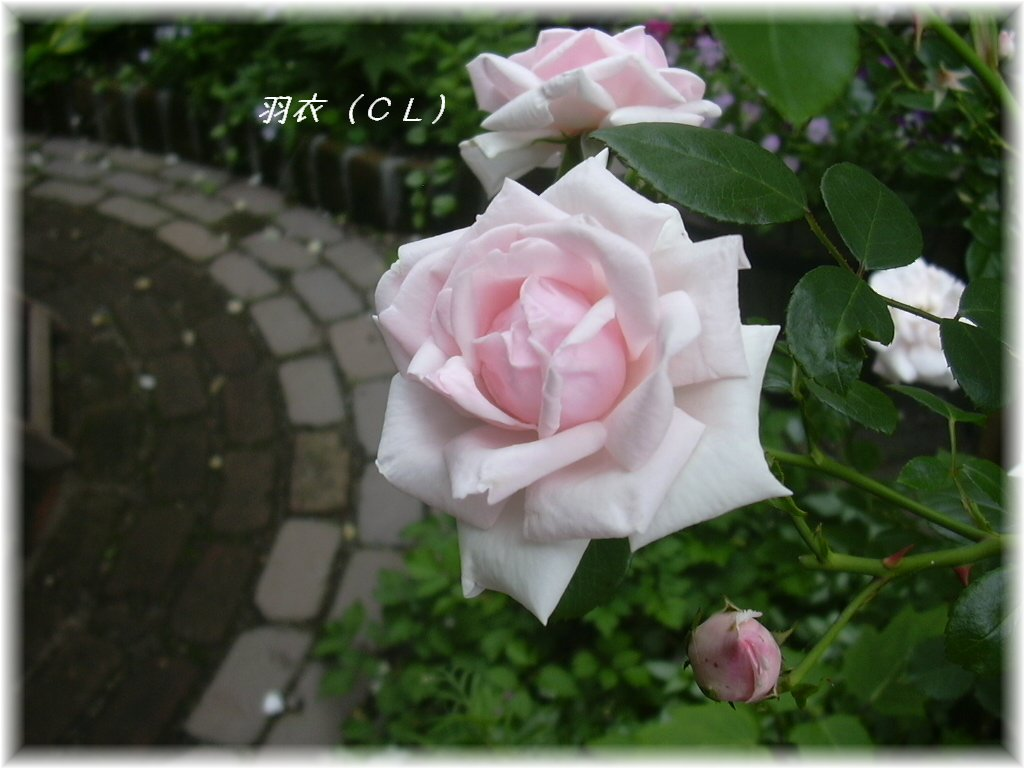 c0078586_2218455.jpg