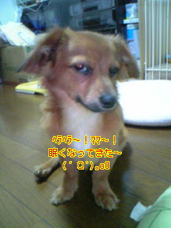 f0090516_101115.jpg