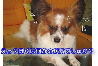f0011845_19503076.jpg