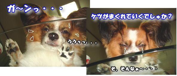 f0011845_2075585.jpg