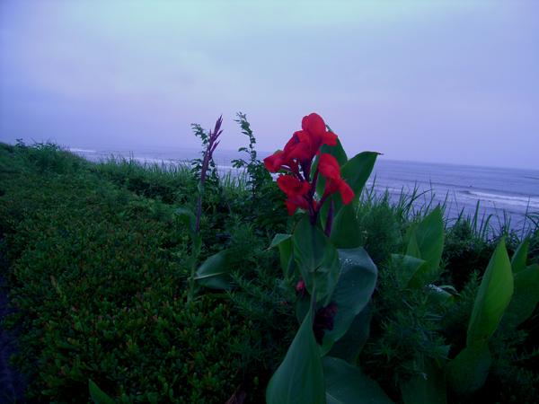 待ち遠しい夏の陽。_b0022268_2145778.jpg