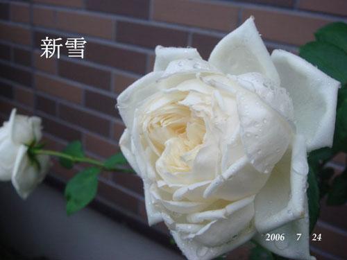 f0057006_14305634.jpg