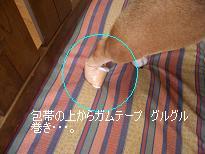 f0081519_1334519.jpg
