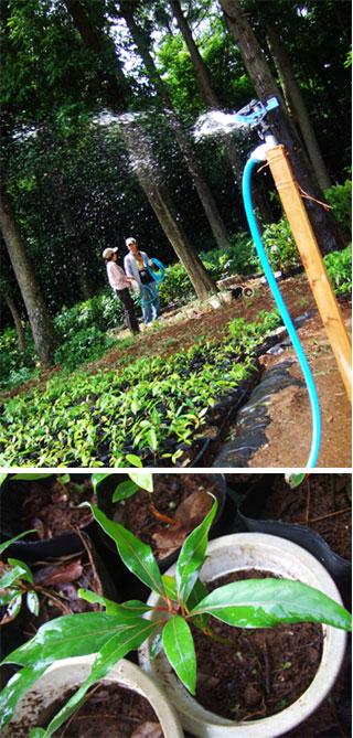 地球に木を植えよう_f0038727_0101564.jpg