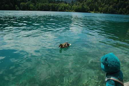 ブレッド湖 (スロヴェニア) その1_e0076932_640742.jpg