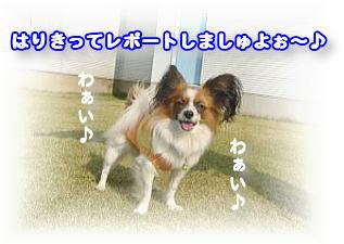 f0011845_17492993.jpg