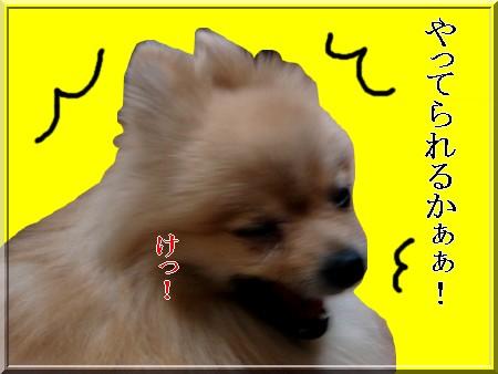 b0078073_21551269.jpg