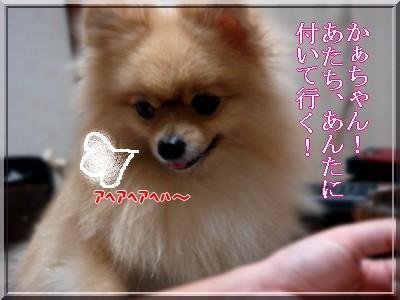 b0078073_21584654.jpg