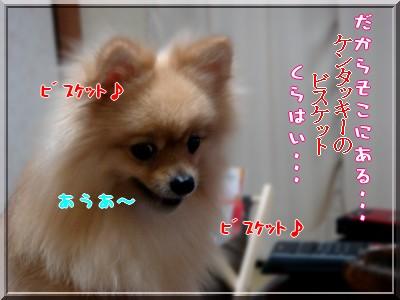 b0078073_2159632.jpg