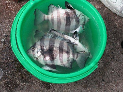魚釣りの様子_e0087201_2221514.jpg