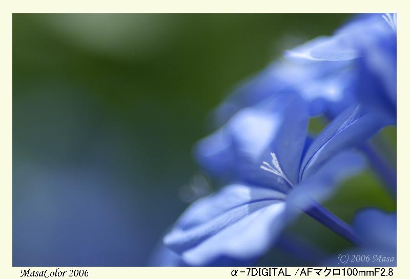 f0063363_21152323.jpg