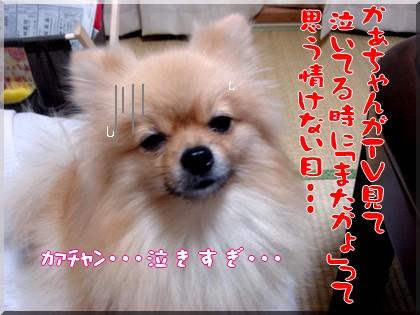 b0078073_23441765.jpg