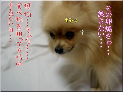 b0078073_2348466.jpg