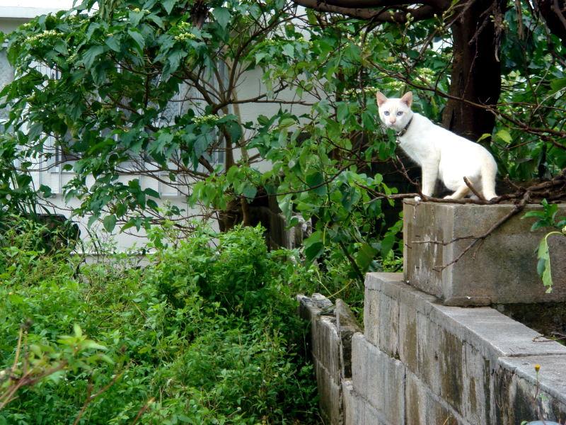 宮古島の猫と犬_e0004009_23422262.jpg