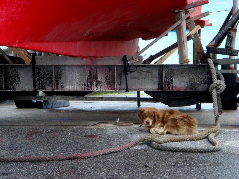 宮古島の猫と犬_e0004009_2343879.jpg