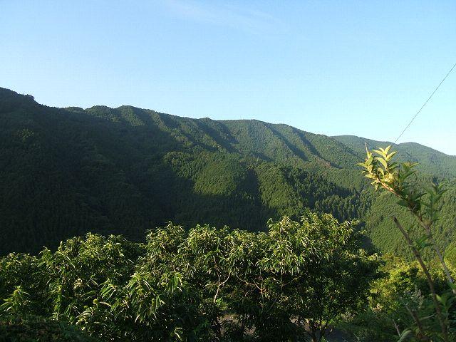 田舎の風景(愛媛帰省)_e0089232_21575015.jpg