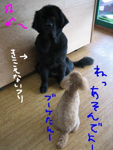 b0101465_1033165.jpg