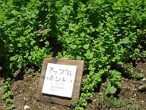 ほやらの庭_a0080074_14413649.jpg