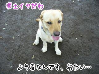 f0043658_2221788.jpg