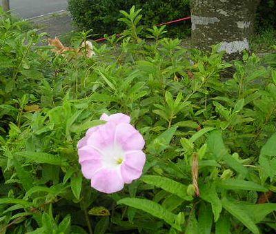 7月27日(木)・・・うり坊5匹が庭に!!_f0060461_14361931.jpg